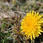 la flor del jardín
