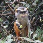 Everybody Loves Monkeys!