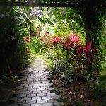 Chillies Garden Pathway