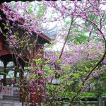 Wonderful flowers on Fengdu
