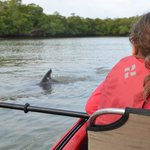 Close contact with Dolphins at 10 000 island tour