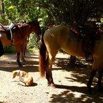 Brigitte's horses