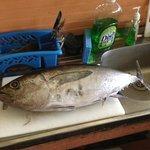 Tuna for dinner