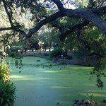 Pond at Domaine Chandon