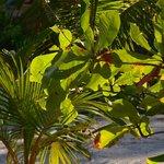 Tropic foliage on grounds