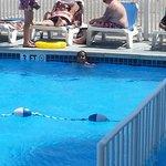 the acacia pool