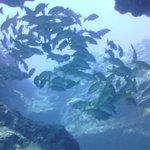 Swimming thru cavern