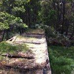 Nearby bush walk