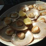 Hervey Bay Scallops pan-fried with soy, ginger & mirin