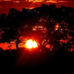 Glamerous Sunrise in the African Bush