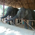 Small elephants