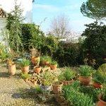 Part of the beautiful garden