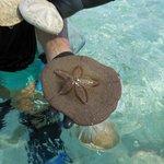 Shells on the Star island