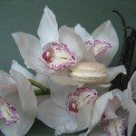 Adriana: un macaron de orquídea, vainilla Bourbon y almendra amarga