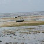 effetti della bassa marea