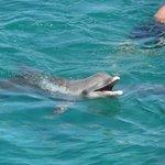Golfinho - Lindo e meigo