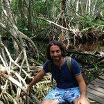 Le mangrovie sulla passerella