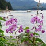 Alaskan Fireweed on the beach