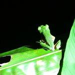Night tour (red-eyed frog!!)