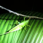 Night tour (camouflaged insect)