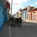 Die Pferde stehen für den Ausritt bereit