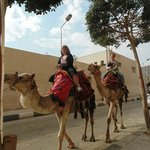 Camel rides avalible right on the street in front of the Inn