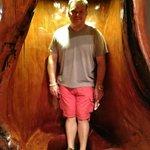 Todd inside a hollowed kauri tree