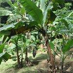 Seychelles National Botanical Gardens