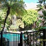 Beautiful, lush, tropical pool area!