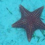 Starfish!!!!