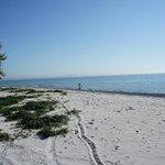 Beach @ Quinte's Isle