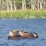 Turtles on river tour