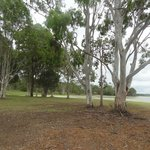 The beauty of the Australian gum trees by the lake
