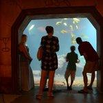 Aquarium view.