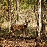 Wayanad Reserve
