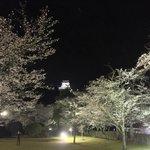 夜桜満開の敷地内より犬山城を望む