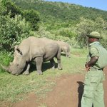 Visit to a white Rhino Sanctuary