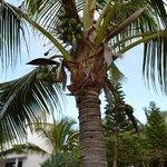 palms galore paradise island.. illot maitre