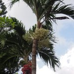 trees of the resort