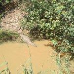 Крокодильчик на берегу