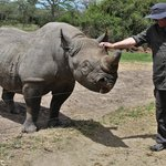 Meeting Baraka the bkind rhino