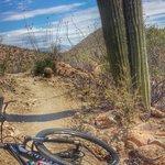 Mountain bike rental with PNUT AWESOME