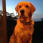 Chubbs (House Dog)