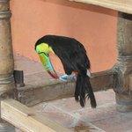 Aprecie tucanos no hotel!