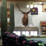 Quite a bit o taxidermy. Great shop. Pretty big. Tons of nick nacks and t shirts