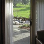 Ground floor room with patio and golf course view.