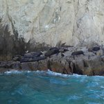Some Mexican sealions