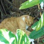 Hercules, the resident kitty