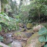 Na floresta uma pequena cachoeira