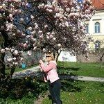 Магнолии в марте цветут